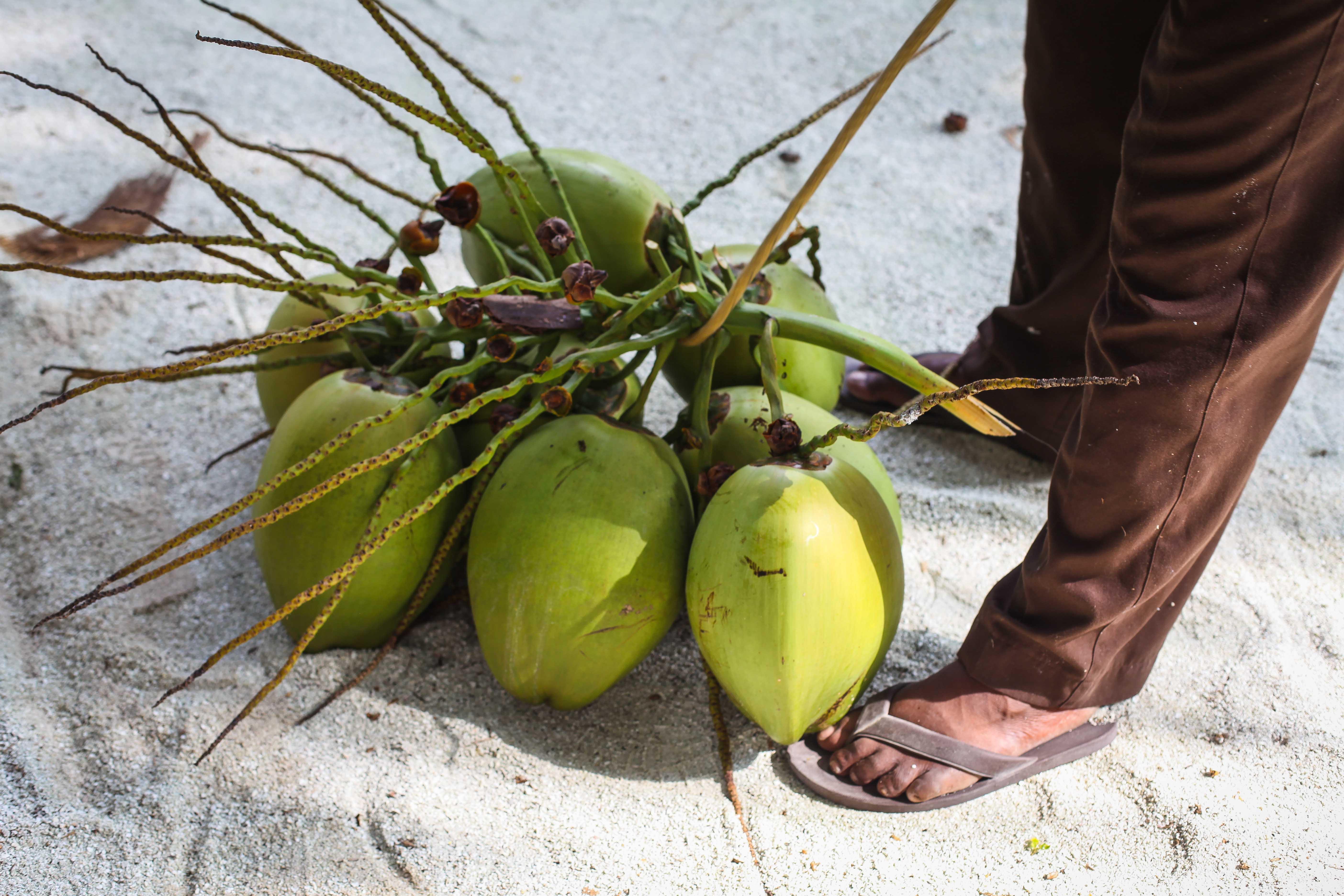 Condor Cocos Cookies Maafushivaru Zuckerzimtundliebe Malediven Trauminsel-21
